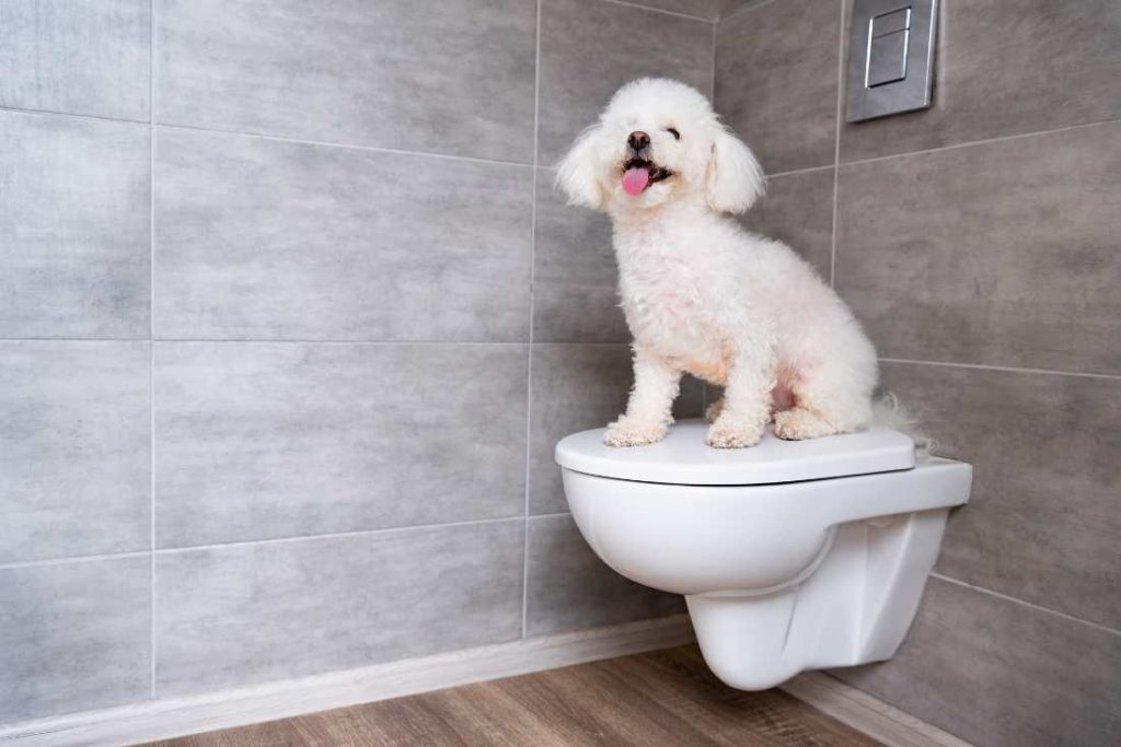 Dog Sitting On Closed Toilet