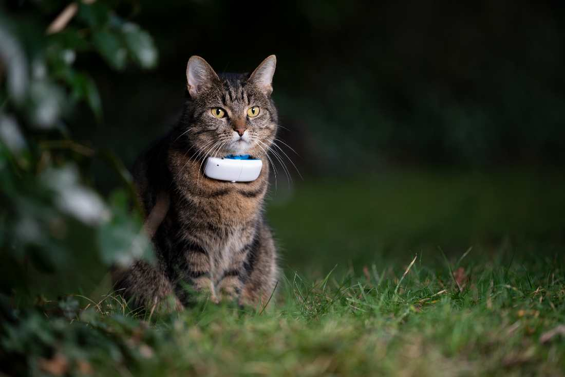 Gps Tracker On Cat